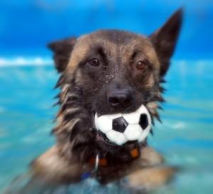 Hundesport mit Malinois